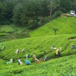 Separate policy stressed for promoting green tourism